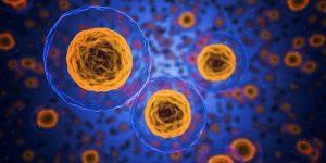 shranjevanje matičnih celic